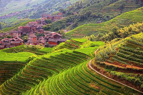 Plantação de arroz nas encostas das montanhas da China, com uma vila ao fundo.