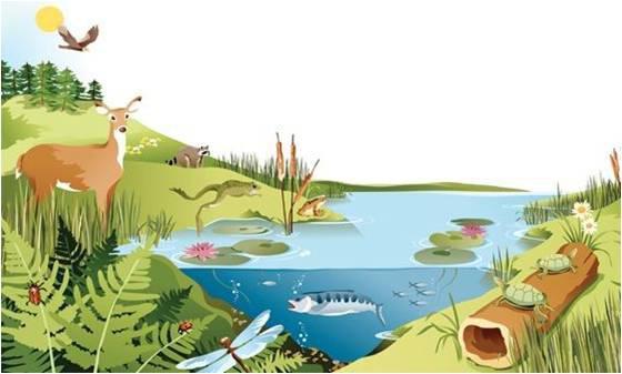 النظام البيئي: مدى تحمل الكائنات الحية للعوامل الكيميائية والفيزيائية