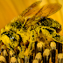 'Spell Bee League Carnival' to be held in the city this weekend