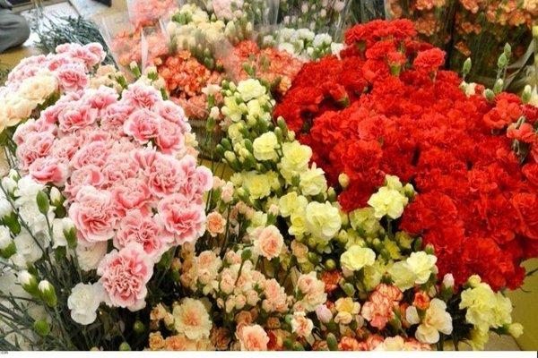 saint valentin il ach te 900 fleurs pour en offrir une chaque fille de son lyc e hors de. Black Bedroom Furniture Sets. Home Design Ideas