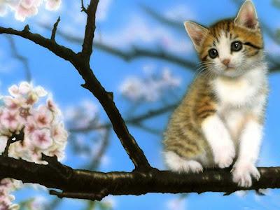bhigi-billi-sitting-on-the-flower-branch