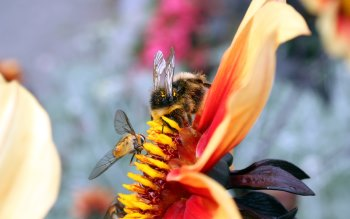Wallpaper: Bees on flowers