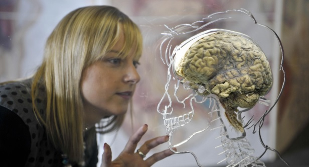 Il cervello delle donne sembra più giovane degli uomini, lo studio trova