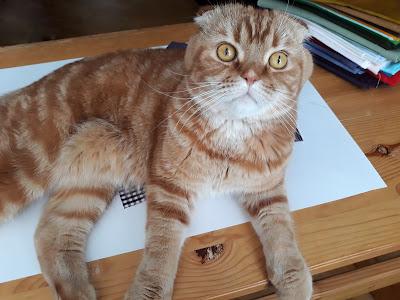 рукодельный кот