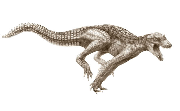 Image result for crocodyliforms