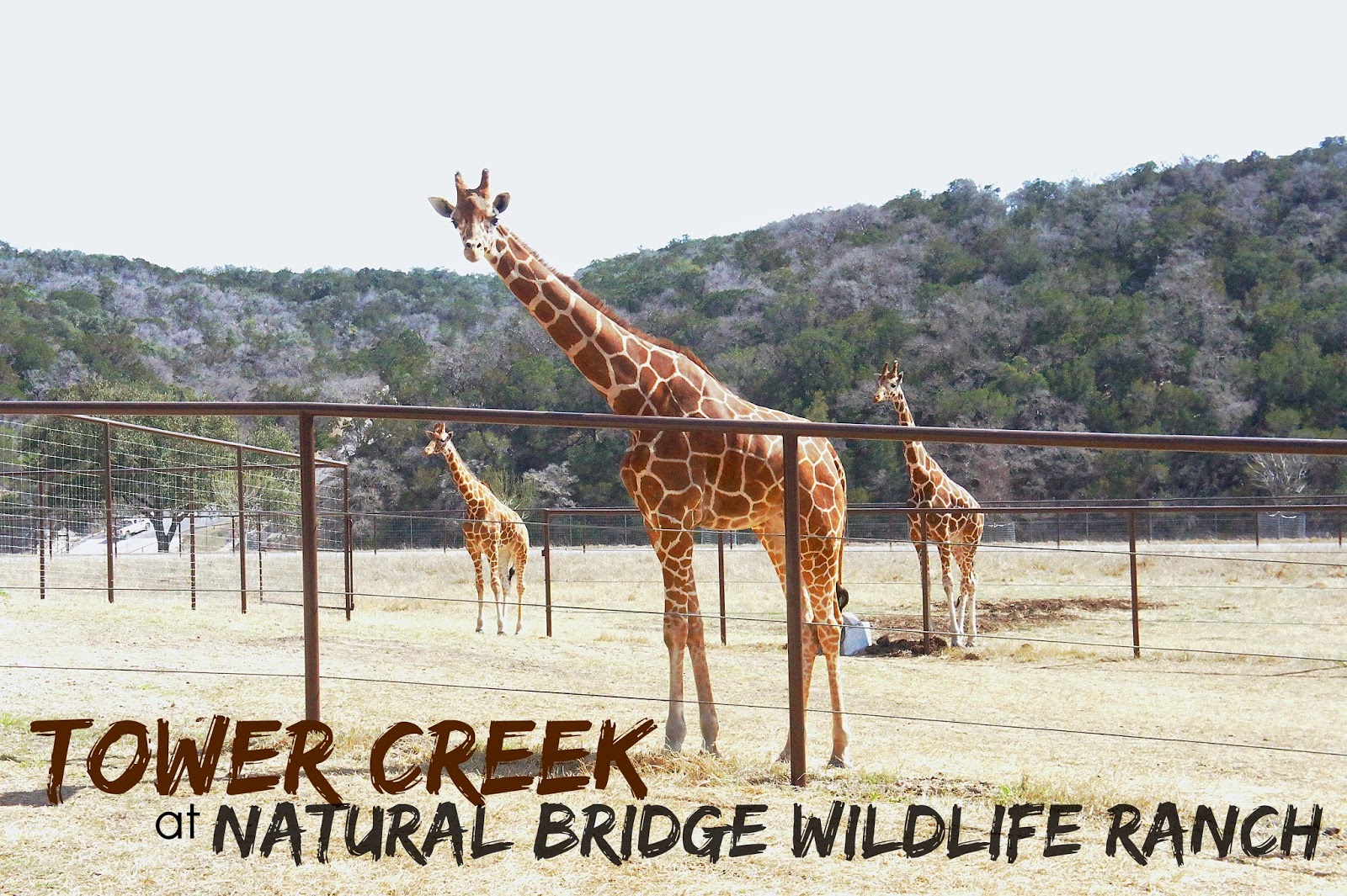 New! Tower Creek at the Natural Bridge Wildlife Ranch