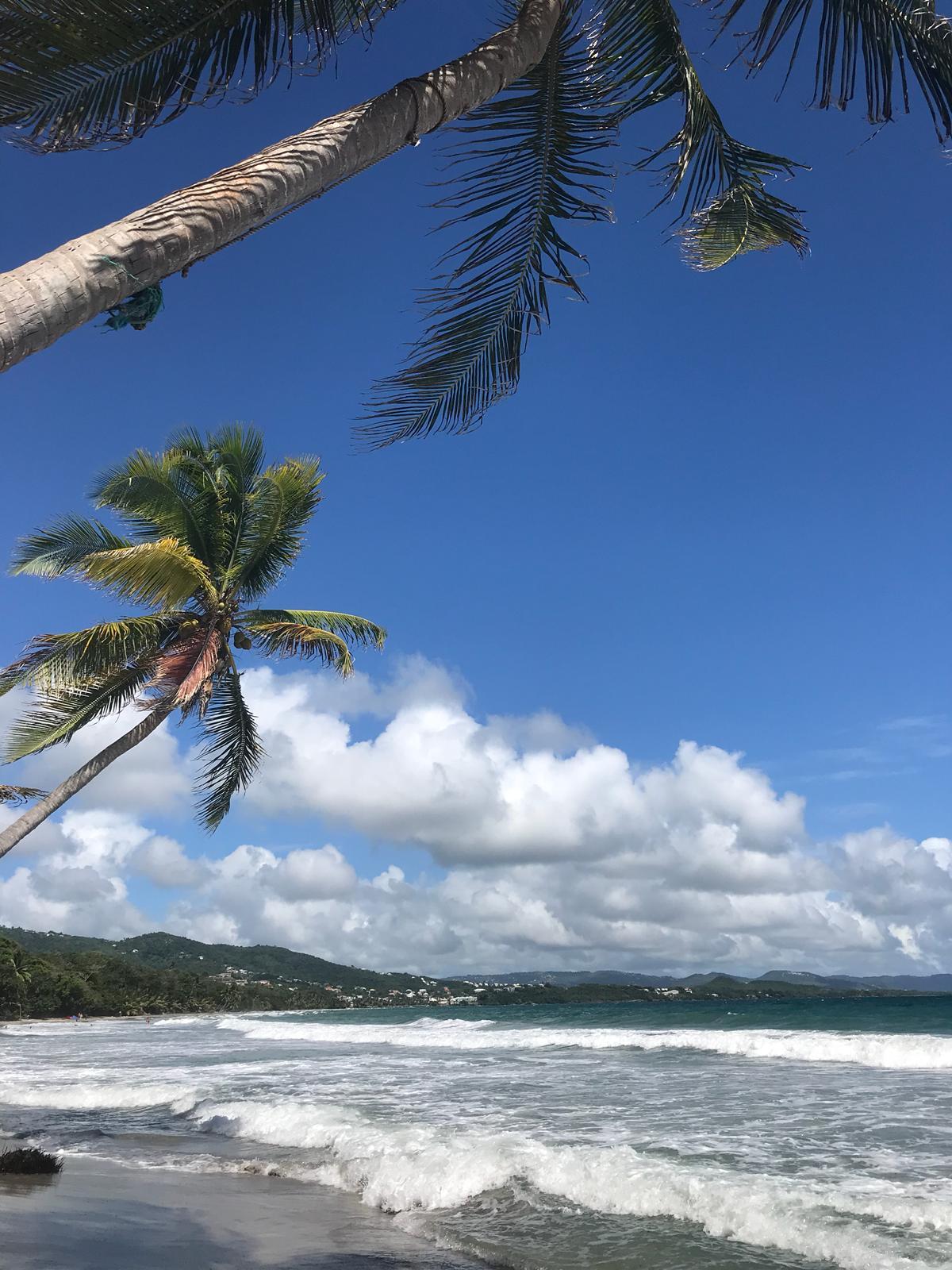 palmiers et eau turquoise sur la plage du diamant en martinique