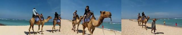 bali camel safari