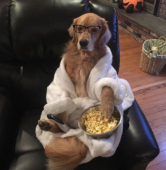 Dieta para perros adultos