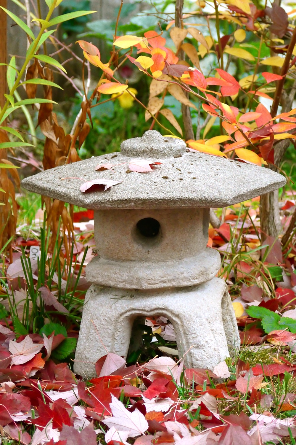 autumn garden, garden photography, Lumix GH2 digital camera, garden photography using a Lumix GH2 digital camera, Lumix GH2 DSLR, Lumix digital camera, autumn garden photography using a Lumix GH2 digital camera, childhood memories, my ambition is to be a photographer, passion for photography, childhood dreams, photographing my garden, my garden in autumn, autumn garden photography, hydrangeas in autumn, autumn hydrangeas, autumn dahlia, dahlia in autumn, Japanese lantern in autumn, golden autumn leaf, red autumn maple leaves, autumn echinacea, autumn maple leaves, yellow rose in autumn, autumn echinacea thistles, red autumn Japanese maple leaves, purple echinacea in autumn, yellow squash blossom in autumn, backyard sparrow, autumn tea time, teatime in autumn, tea drinking in autumn, Japanese ironstone, Independence Ironstone Japan