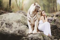 Gaya Poto mu Harimau mu