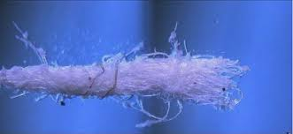 Revealing Truth for Child and Family Justice: MORGELLONS - GMO