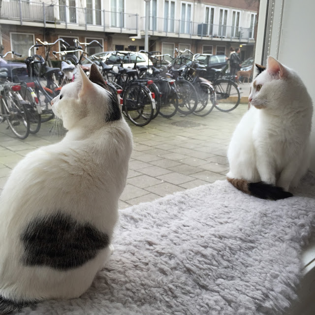 cat cafe amsterdam