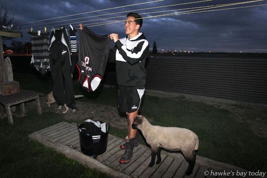 Tiaan Falcon, Hastings, Hawke's Bay Magpies rugby team, hanging out the washing with the help of Pipi-Rose, the pet lamb. photograph