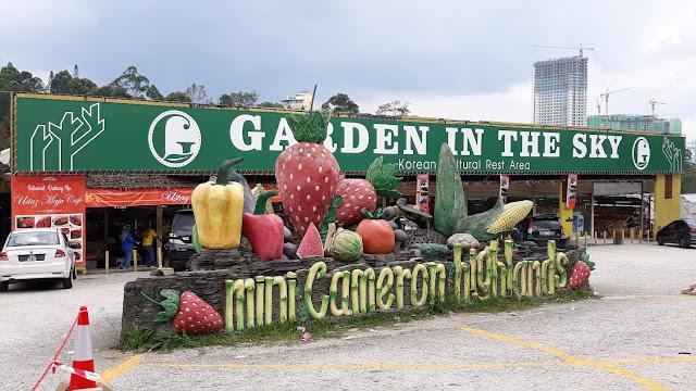 Mini Cameron Highlands Garden