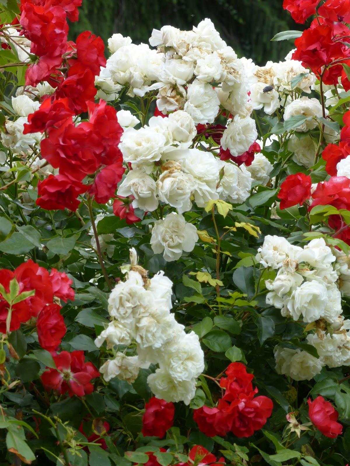 Il fait bon se promener dans les parcs et jardins environnants aux  multiples fleurs, les rues piétonnes bordées de balcons fleuris, sous les  arcades ... 2d5e02b1daa5