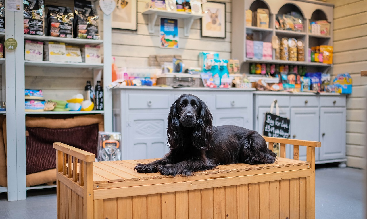 Pet Shops to Visit in Cornwall