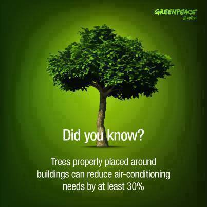 save trees in 200 words Learn some key reasons why living trees are important, necessary, and valuable to our very human existence.