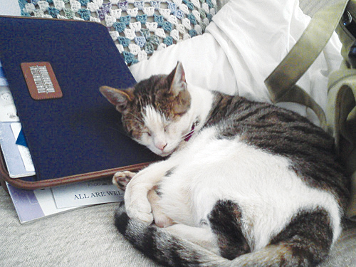 Elizabeth the cat sleeping on Toastmasters portfolio