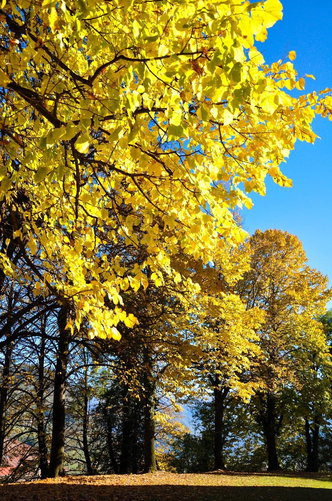 Autumn trees, Feltre, Veneto, Italy