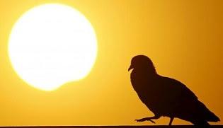 Hasil Penelitian Perilaku Hewan Saat Gerhana Matahari Total Terjadi