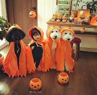 disfraces de halloween para niños y perros