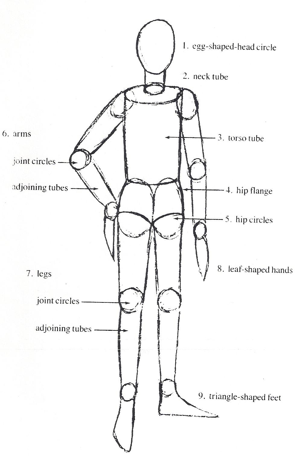 Visual Arts The Body Proportions