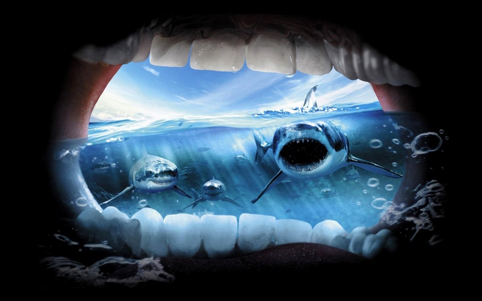 Haaien Achtergronden |...