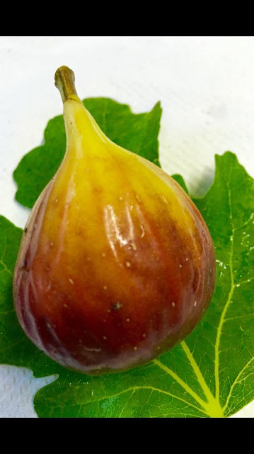 Archipel Fig