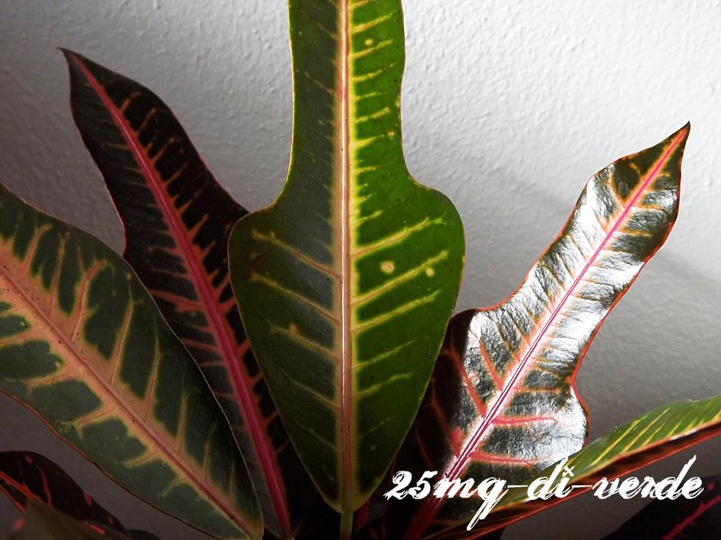 Home sweet home piante da appartamento 25mq di verde for Acquisto piante