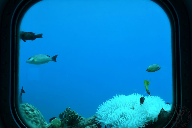 viewing window, corals, fishes