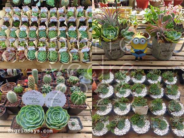 succulents - Bacolod wedding giveaways - Bacolod wedding suppliers