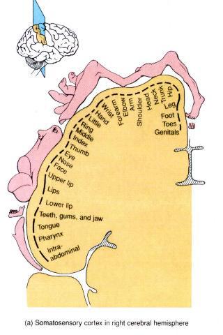 Female erogenous zones diagram were visited