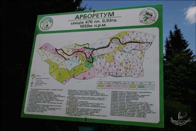 park dendrologiczny w Gorganach