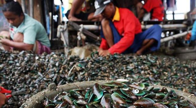 Kerang dari Selat Malaka tercemar logam berat