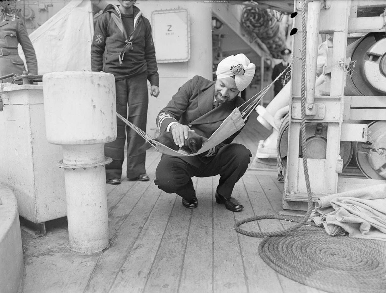 A Persian kitten takes a break from hunting rats in a specially made hammock aboard the sloop HMS Godavari.