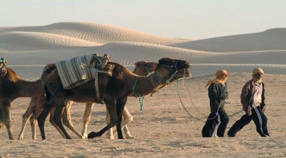 الجنوب التونسي : واحات السراب والرمل والنخيل