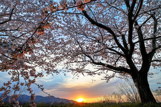 #photo #sigma #foveon #sdquattroh #japan #写真 #梅