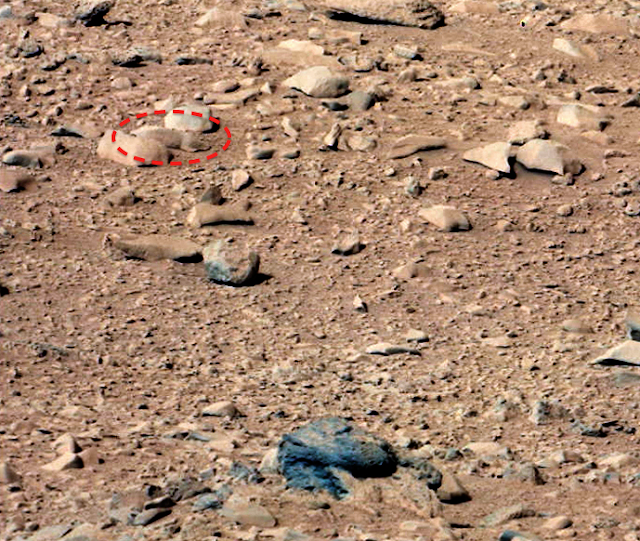 UFO SIGHTINGS DAILY: Squirrel Discovered In NASA Curiosity ...