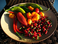 African Hot Peppers by John Winkelman