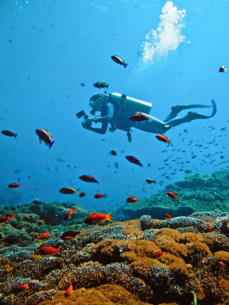 10 Places You Shouldn't Miss in Indonesia | Scuba diving in Bali Nusa Lembongan
