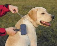 como cepillar el pelo del perro