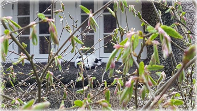 pflanzenmarkt am kiekeberg duschpaneel mit thermostat. Black Bedroom Furniture Sets. Home Design Ideas