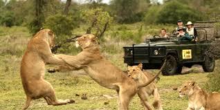 A Big 5 Safari in Kruger National Park south africa travel