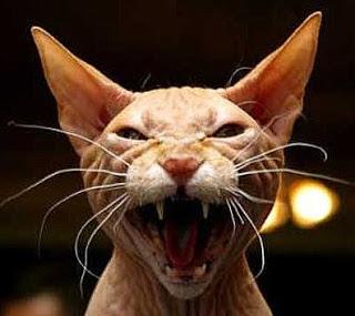 História de terror de gato