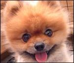 puppy cute
