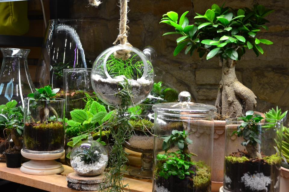 le blog de clesa les terrariums chez clesa. Black Bedroom Furniture Sets. Home Design Ideas
