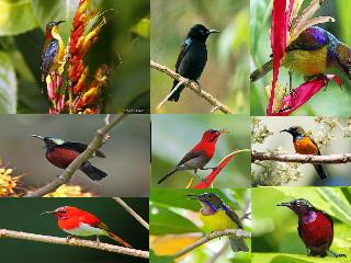 Ragam Dan Jenis Burung Kolibri Yang Hidup Di Indonesia Sangkarlapis
