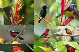 Ragam dan Jenis Burung Kolibri Yang Hidup Di Indonesia