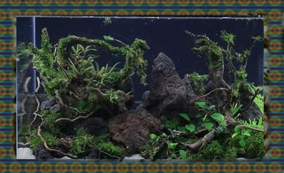 6 Desain Keren Aquascape Tema Hutan | Bagian 1 - Aquascape ...